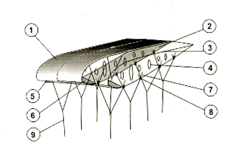Купол параплане с мотором