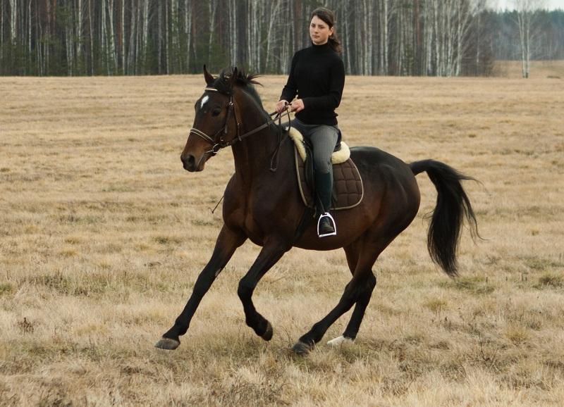 Аренда лошади для прогулки