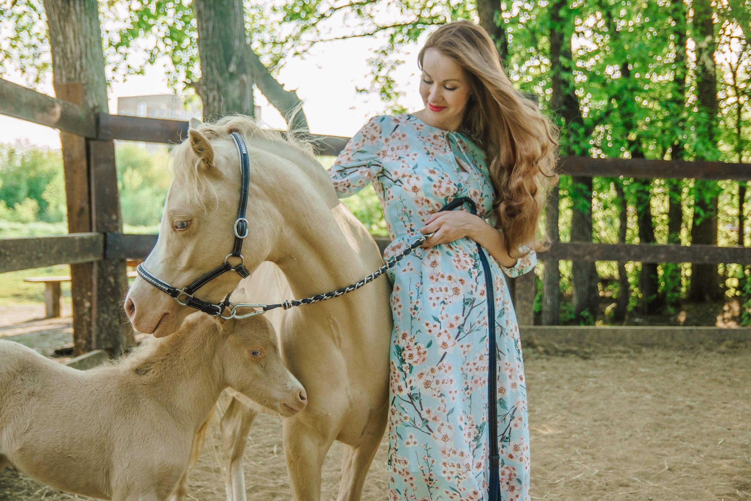 Общение с лошадью