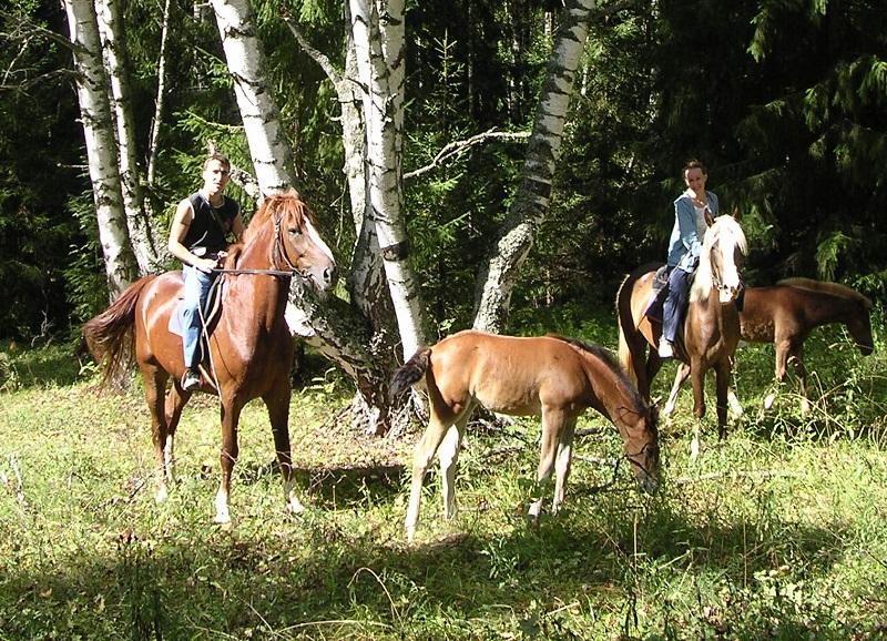 Катание в лесу на лошадях