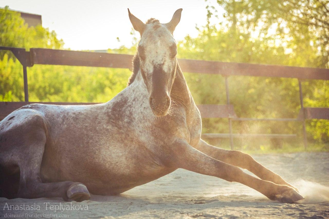 Лошадь для прогулки