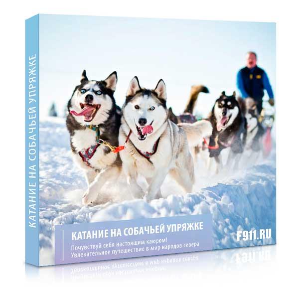 Подарок - Катание на собачьей упряжке